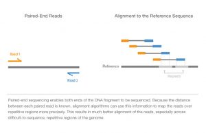 paired-end-vs-single-read-seq-web-graphic
